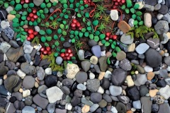 D_Bailey_Cranberries-on-the-Rocks_8x10-_sec